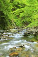 山梨県 西沢渓谷と新緑