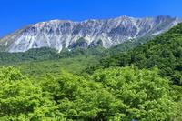 鳥取県 ナナカマドの花咲く新緑の鍵掛峠より大山(伯耆富士)