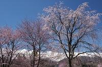 長野県 大出公園