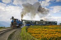 インド ダージリンヒマラヤ鉄道