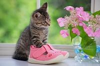 子猫とあじさいの花