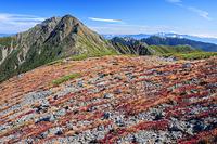 山梨県 中白峰稜線より草紅葉と北岳と鳳凰三山 南アルプス