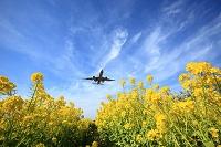 菜の花畑と飛行機