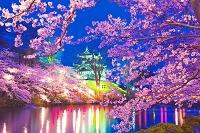 新潟県 桜の咲く高田城