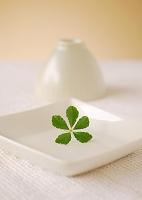 白い食器にのせたグリーンの葉