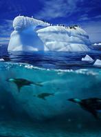 流氷とペンギン