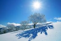 三重県 鈴北岳の樹氷と太陽