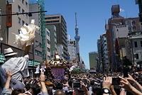 東京 浅草の三社祭