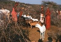 ケニア サンブール国立保護区