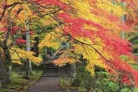 京都府 龍穏寺の紅葉
