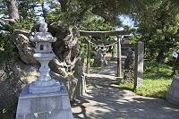 新潟県佐渡市 津島神社 安産の松
