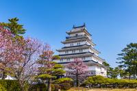 長崎県 梅咲く島原城
