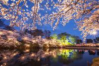 新潟県 ライトアップされた高田公園の高田城三重櫓と桜