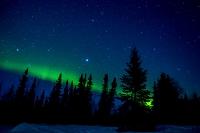 アラスカ フェアバンクス オーロラとタイガの森 こと座とはく...