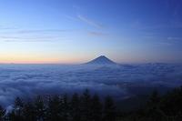 山梨県 韮崎市 甘利山から望む朝焼けの富士山と雲海
