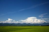 新潟県 田園と朝日連峰と積乱雲