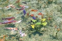 岐阜県 根道神社の池・通称モネの池