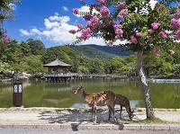 奈良県 鷺池と浮見堂