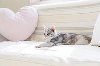 ソファで寛ぐ仔猫