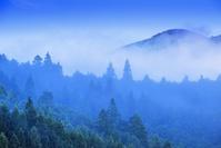 三重県 朝霧のツエノ峰