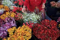 ポルトガル マデイラの花屋