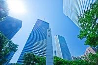 東京都 新宿の高層ビル群 新緑