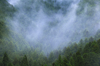 雨上がりの杉山
