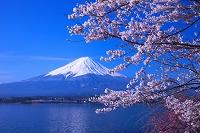 山梨県 富士山 桜 霧