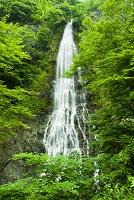 兵庫県 天滝