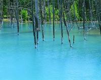 北海道 美瑛町の夏 白金の青い池