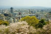 熊本駅と桜