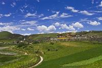 中国 雲南省 迪慶チベット族自治州  大麦畑と松賛林寺