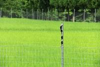 滋賀県 害獣駆除の電気柵