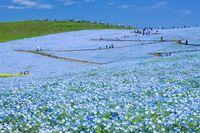 茨城県 国営ひたち海浜公園