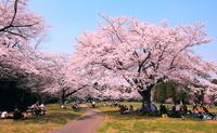 春爛漫 花見 泉自然公園