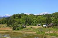 長野県 新緑の山村と北アルプス後立山連峰