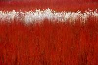 スペイン カニャマレス 赤い籐