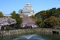 姫路 桜 姫路城 噴水と大天守閣