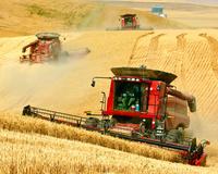 アメリカ ワシントン州 小麦の収穫