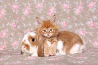 子猫とウサギ