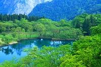 新潟県 糸魚川市 初夏の高浪池