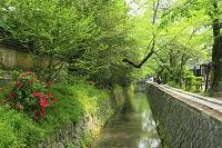 京都府 哲学の道の新緑