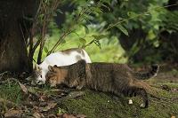 猫とキノコ