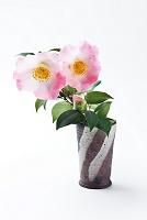 花瓶に入った椿の花