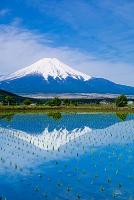 山梨県 水田の逆さ映りの富士山