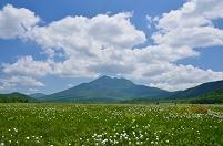 群馬県 片品村 ワタスゲ咲く尾瀬ヶ原と燧ヶ岳