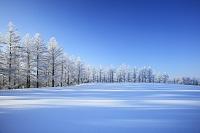 北海道 霧氷の丘と雪原