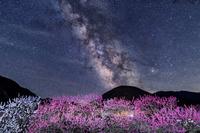 長野県 阿智村 花桃の里と天の川