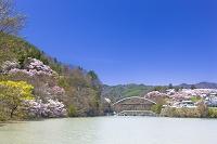 長野県 高遠城址公園 高遠小彼岸桜 高遠湖と白山橋