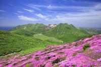 大分県 ミヤマキリシマ咲く平治岳からのくじゅう連山